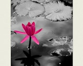 Nature Prints - lotus flower photography, The Extrovert -  magenta, charcoal grey, nature art, girls room