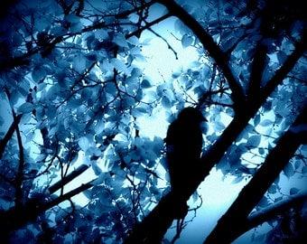 Blackbird Photograph, Bird Wall Decor, Aviary Art, Nature Photography, Black Blue Home Decor, Bird Silhouette