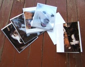 Blank Dog Greeting Card Set of 5