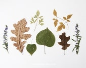 Bits of Autumn - 8x10. Fine Art Photographic Natural History Print. Minimal simple style. Natural Home Decor. Indoor garden botanical