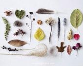 Botanical - 8x10. Fine Art Photographic Natural History Print. Minimal simple style. Natural Home Decor. Indoor garden botanical