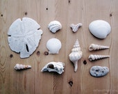 White Bones - 8x10. Fine Art Photographic Natural History Print. Minimal simple style. Natural Home Decor. Fossil collection