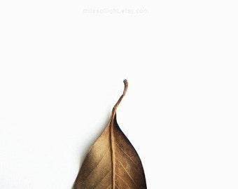 Winter Series N2. 8x10. Fine Art Photographic Print. Minimal. Natural Home Decor. Indoor garden botanical.