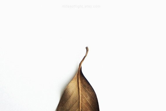 Winter Series N2. 8x10. Fine Art Photographic Print. Minimal. Natural Home Decor. Indoor garden botanical.