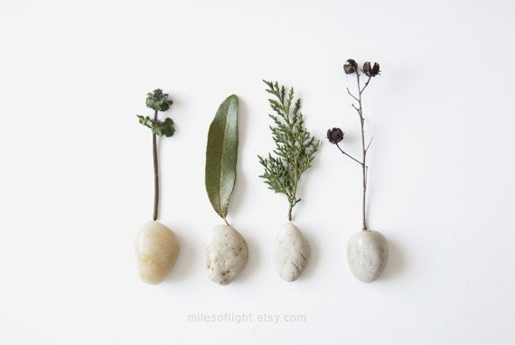 FOREST N1 - 8x10. Fine Art Photographic Natural History Print. Minimal simple style. Natural Home Decor. Indoor garden botanical