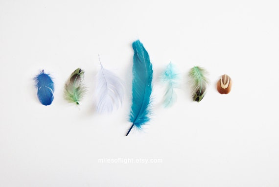 Blue Feathers - 8x10. Fine Art Photographic Natural History Print. Minimal simple style. Natural Home Decor. Indoor garden botanical