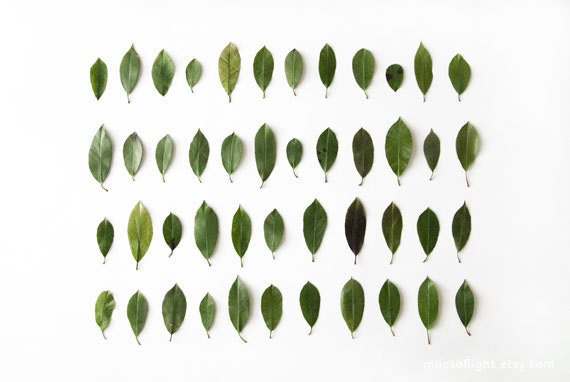 Leaves Collection N1. 8x10. Fine Art Photographic Natural History Print. Minimalist. Natural Home Decor. Indoor garden botanical.