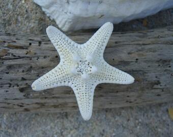 STARFISH Bobby Pin/Slide-Beach Weddings, Mermaid Hair, Summer Fun, Coastal Chic, Starfish Hair Clip