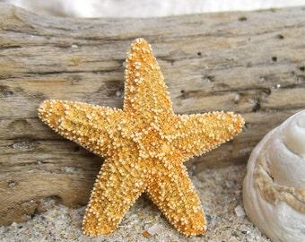 Starfish Hair Clip-Petite Sugar Starfish Hair Clip-Beach Wedding, Mermaid Birthday Party, Mermaid Hair, Starfish Wedding, Bridal Hair Clip