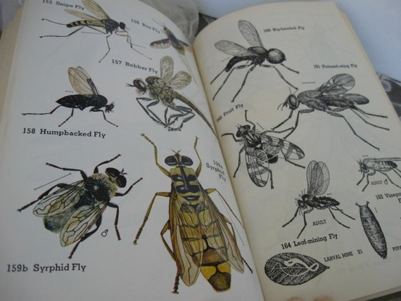 The INSECT Guide by Ralph B. Swain Rare Edition U.S. Department of Agriculture Entomology 1948 copyright HB DJ Collectible Edition