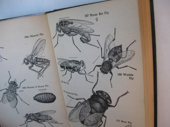 The INSECT GUIDE by Ralph B. Swain U.S. Department of Agriculture Entomology 1948 Rare Black HB Collectible Edition