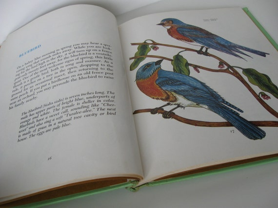 A Childs Book of BIRDS illustrated by Fritzi Brod by W. J. Beecher