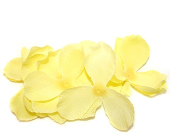 25 Peony Flower Petals -  Yellow