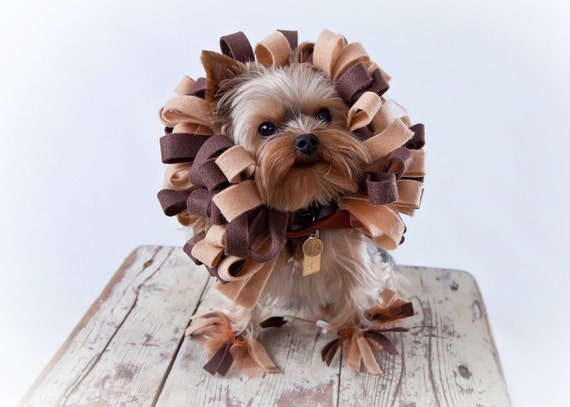 like this item - Halloween Costume For Small Dogs