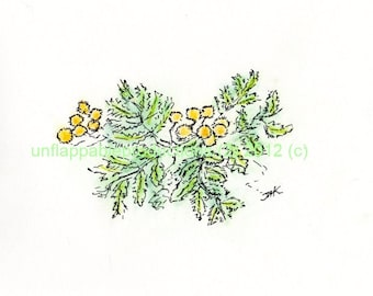 Yarrow One 5 x 7 Greeting Card with Matching Envelope