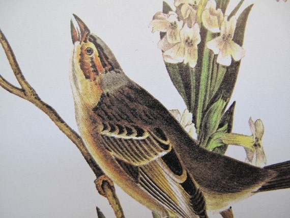 SALE SALE // Vintage Litho Print / READY TO FRAME OR COLLAGE / Shattuck's Bunting-male / J. J. Audubon Color Bird Print / plate 493 / A PRECISE REPLICA OF THE COMPLETE WORKS OF JOHN JAMES AUDUBON COMPRISING THE BIRDS OF AMERICA (1840-44)