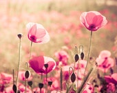 Heaven PRINT ONLY - poppy flowers photography, pastel pink photography, sky, nature, floral, spring, macro 5x7