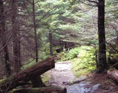 Unique Top of the World Wilderness ACEO Photo print Mt Mitchell North Carolina Mountains Hiking Trail rocky path 3 for the price of 2 - free US Shipping