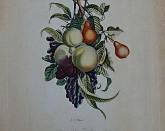 Vintage Botanical Peony And Iris  Print J. L. Prevost