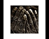 Old Hands 8X8 Square Fine Art Print