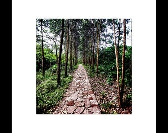 Pathway in the Woods-2 8X8 Custom Print