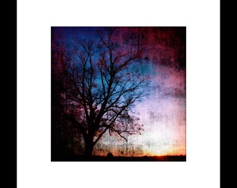 Bare Tree at Dusk 8X8 Fine Art Print
