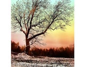 WINTER STAR TREE...16x20 matted Vermont tree sunset photograph soft winter scene snow snowflakes meditation psychedelic trippy art