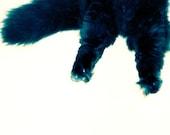 SALE Kitty Pants - Mini Original Fine Art Photograph - 4 x 4