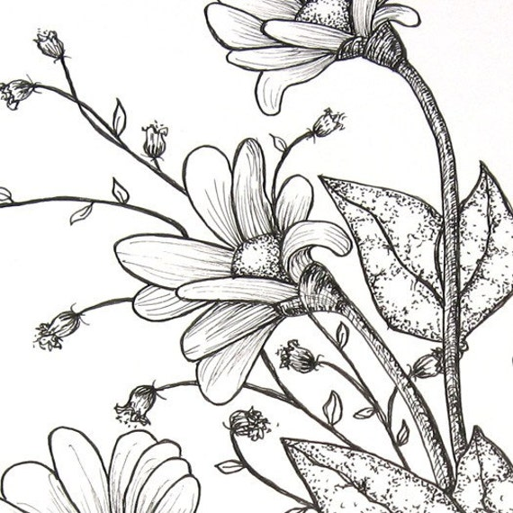 Buttercup, Pen and Ink Original Drawing