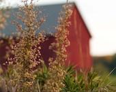 Barn Photograph Red Barn country rustic home decor fall farm New England red barn photography