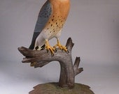 9-1/2 inch American Kestrel male Hand Carved Wooden Bird Carving