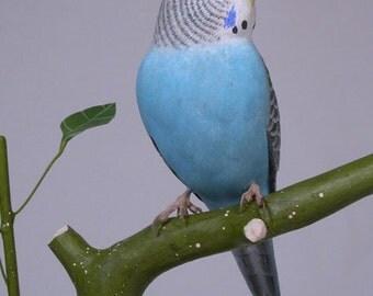 6-3/4 inch Budgerigar (blue) Hand Carved Wooden Bird