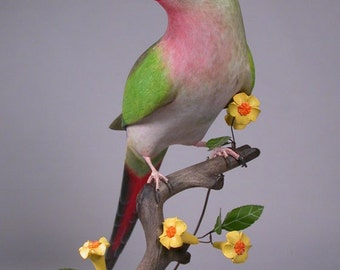 15 inches Princess of Wales Parakeet Hand Carved Wooden Bird Carving