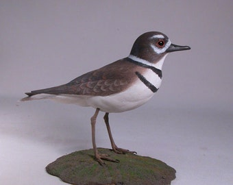 Killdeer Hand Carved and Hand Painted Water bird