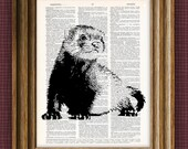 cool FERRET beautifully upcycled vintage dictionary book art print 8.5 x 11