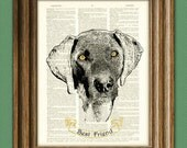 WEIMARANER dog beautifully upcycled vintage dictionary page book art print PERSONALIZED