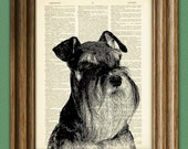 SCHNAUZER Art dog beautifully upcycled vintage dictionary page book art print
