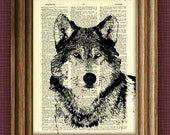 cool WOLF illustration beautifully upcycled dictionary page book art print