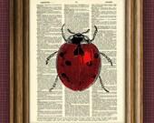LADYBUG bug illustration beautifully upcycled dictionary page book art print