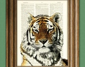 TIGER big cat illustration beautifully upcycled dictionary page book art print