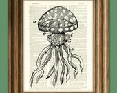 Cool Jellyfish diagram 2 illustration beautifully upcycled dictionary page book art print