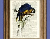 BLUE and YELLOW MACAW parrot bird beautifully upcycled vintage dictionary page book art print