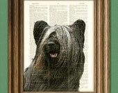 Skye Terrier dog beautifully upcycled vintage dictionary page book art print