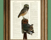 Camera Vintage Owl Art Print The Photographer's Muse  illustration beautifully upcycled dictionary page book art print