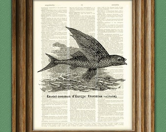FLYING FISH illustration beautifully upcycled dictionary page book art print 8.5 x 11 number 2