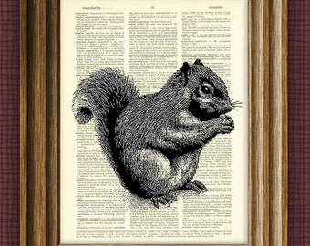 SQUIRREL beautifully upcycled vintage dictionary page book art print 8.5 x 11
