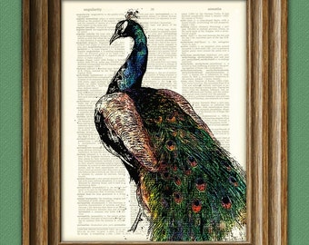 PEACOCK bird illustration beautifully upcycled dictionary page book art print 2 Buy 3 get 1 Free