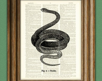 Snake Art Print illustration beautifully upcycled dictionary page book art print