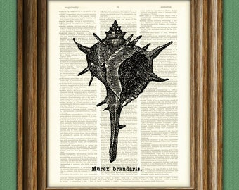 SPINY CONCH Shell art print beautifully upcycled dictionary page book art print