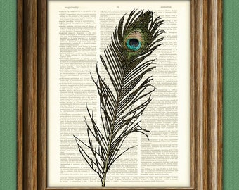 Colorful Peacock Feather bird illustration beautifully upcycled dictionary page book art print 2